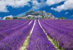 So kennt man die Côte d'Azur: Blauer Himmel, wunderschöne Lavendelfelder!