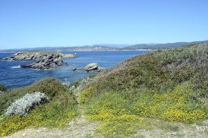 Die wunderschöne Île des Embiez liegt im Mittelmeer.