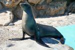 Der Meeres-Themenpark Marineland in Antibes ist 26 Hektar groß.