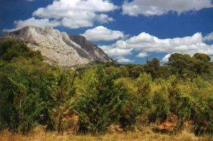 Das Kalksteingebirge Montagne Sainte-Victoire liegt im Süden der Provence.