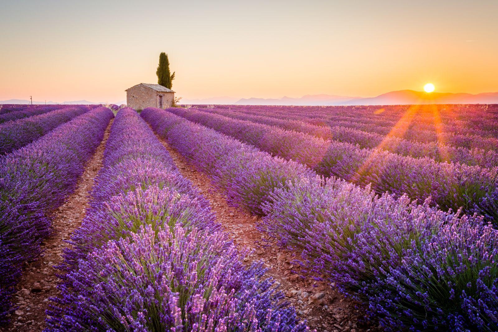 Die meisten Touristen verbinden die südöstlich in Frankreich gelegene Provence mit den bekannten Städten Marseille, Nizza, Toulon oder generell mit der Côte d'Azur. Doch gerade in den ländlichen Gebieten hat die Provence so viel zu bieten.