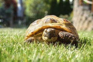 Das Schildkröten-Dorf in Carnoules ist ein sehr nachhaltiges Projekt.