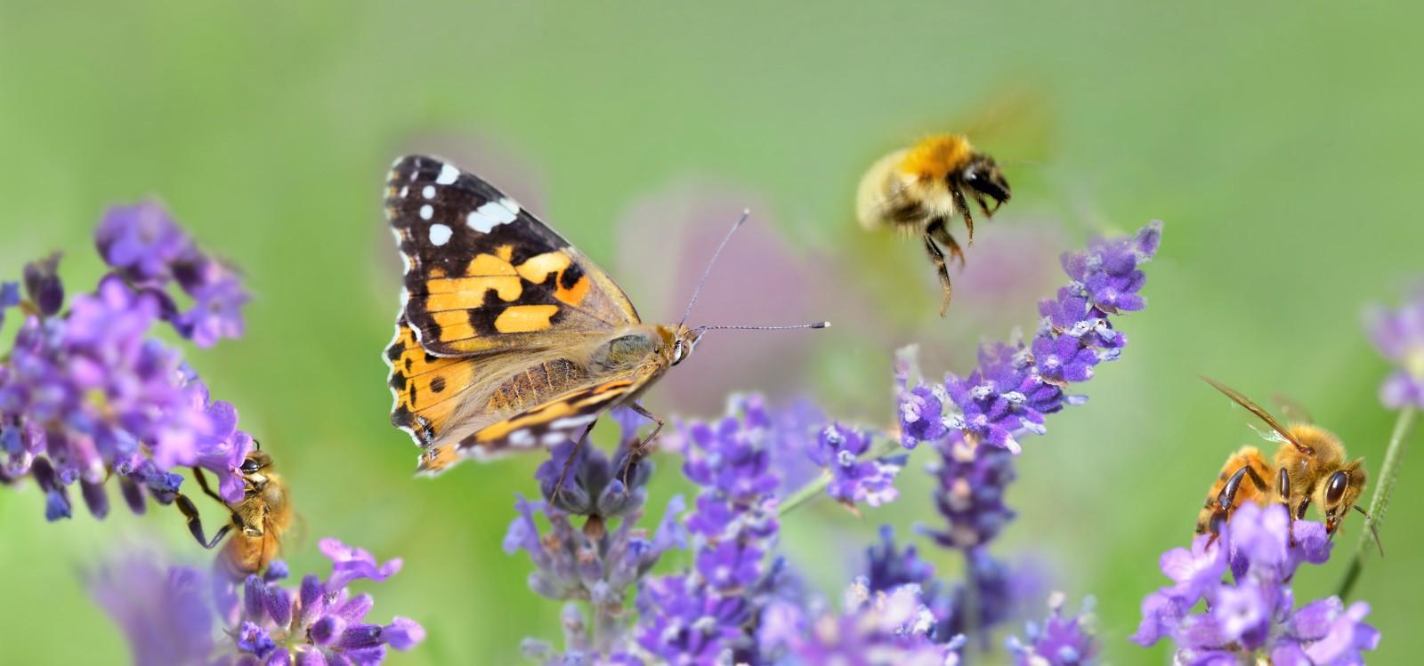 Das Ziel des Parks ist es, Wissen über die Biodiversität innerhalb Marseilles zu erlangen.