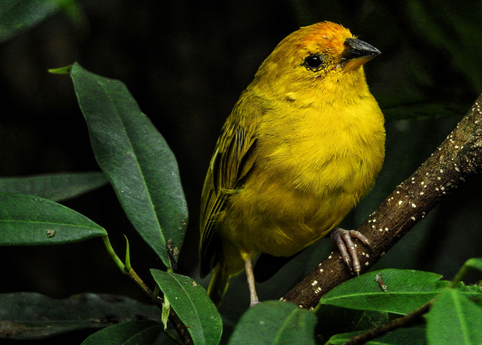 Vogelpark la londe tropische farbenpracht an der mittelmeerk ste provence - Jardin des oiseaux la londe ...