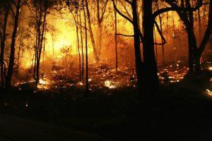 In der südfranzösischen Provence wüten derzeit heftige Waldbrände. Am Montag hat die Feuerwehr circa 10.000 Camper vor dem Feuer in Sicherheit gebracht.