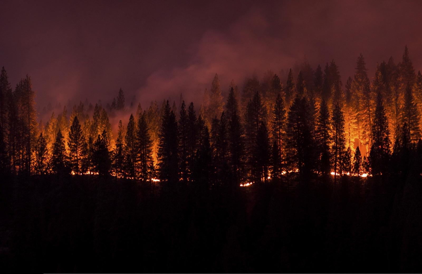 In einem Waldgebiet zwischen Marseille und Cassis sind rund 250 Hektar Wald zerstört worden. Das teilte die Präfektur des Verwaltungsbezirks Bouches-du-Rhône auf Twitter mit.